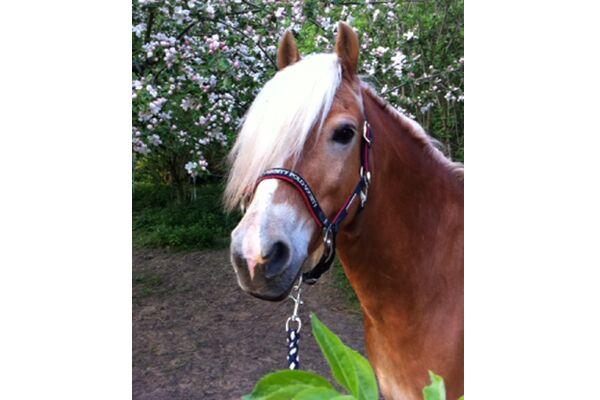 CAV Leserfotos Pferde im Frühling 2013 45