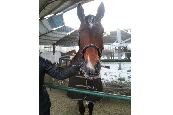 CAV Leserfotos Pferde im Frühling 2013 5