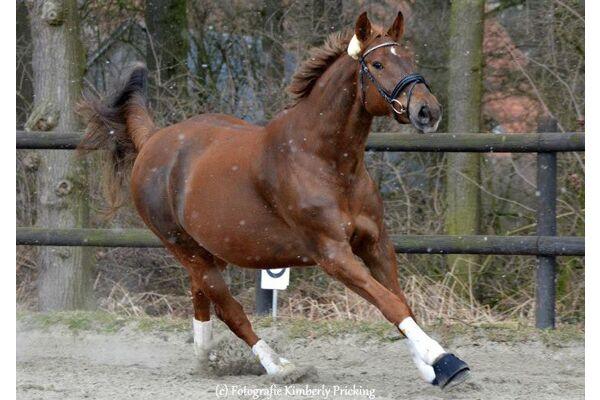 CAV Leserfotos Pferde im Frühling 2013 6