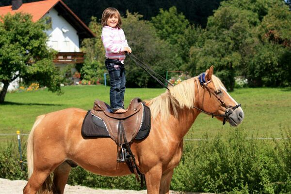 CAV Leserfotos Pferde im Frühling 2013 8