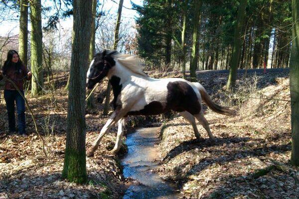 CAV Leserfotos Pferde im Frühling 2013 9