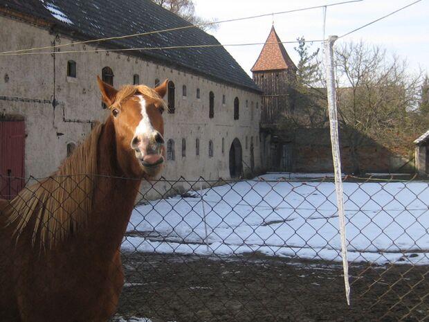 CAV Leserfotos Pferde im Frühling 2013