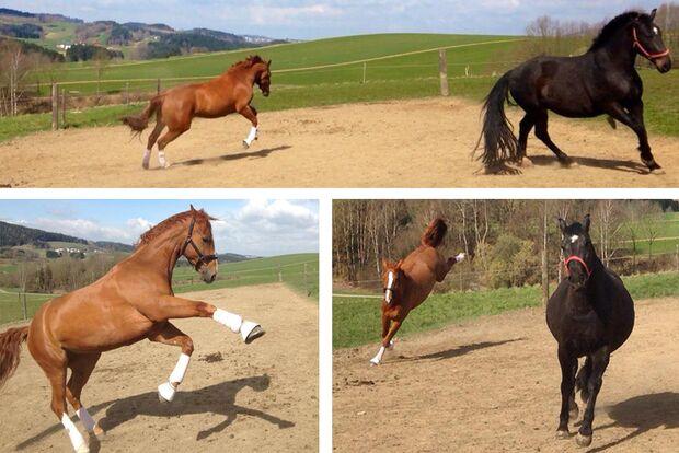 CAV Leserfotos Pferde im Frühling Daniela Geiger