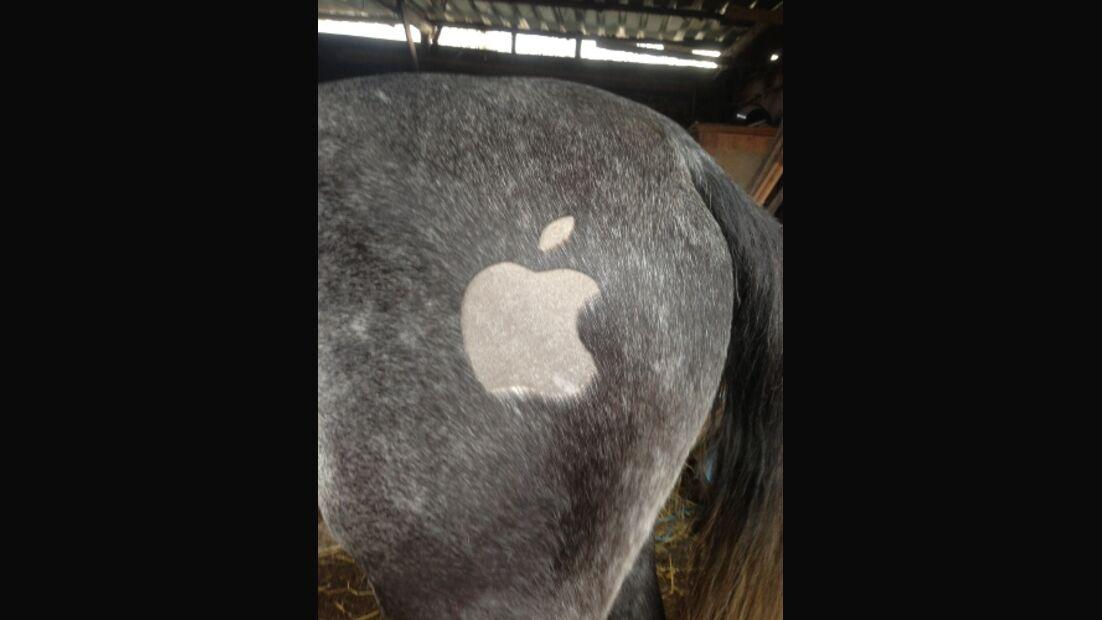 CAV Leserfotos Pferdefotos Schermuster Scheren