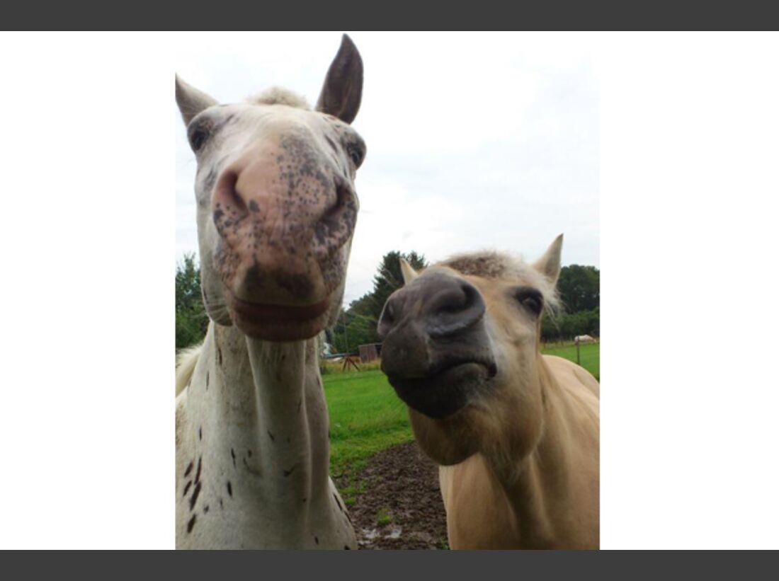 CAV Leserfotos Pferdenasen 12