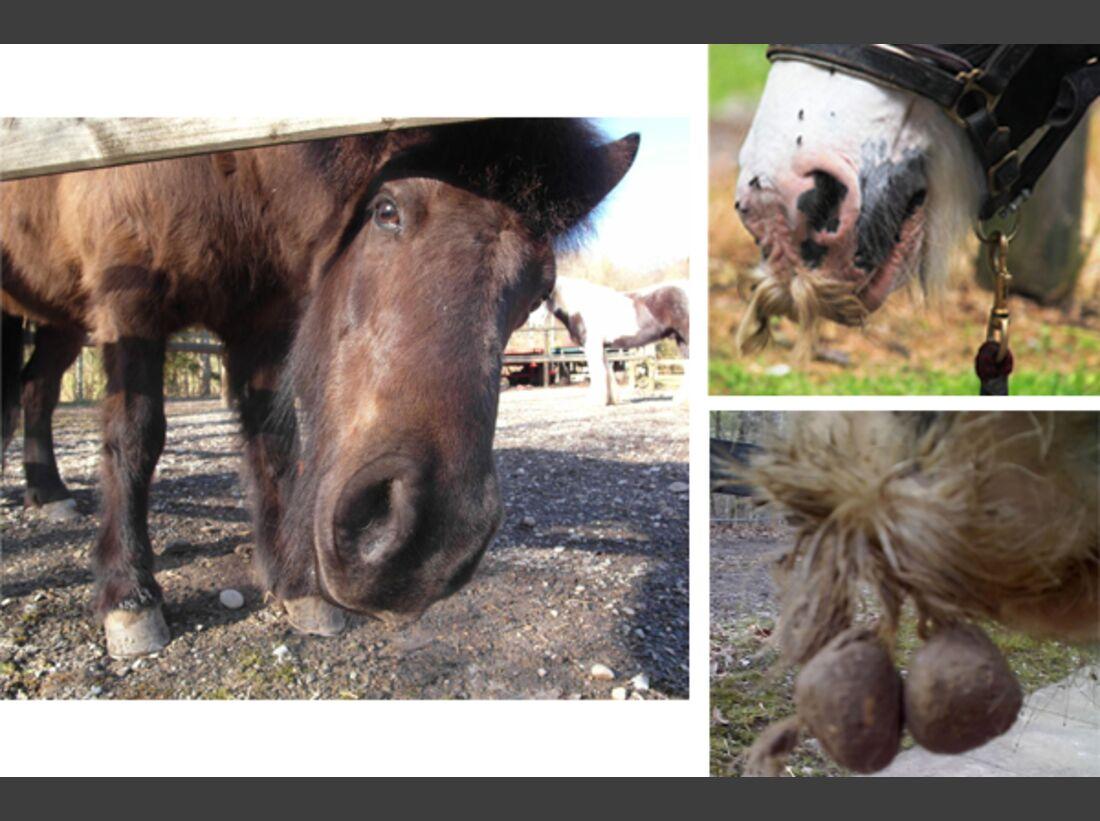 CAV Leserfotos Pferdenasen 14