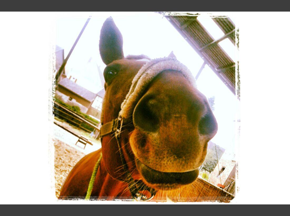 CAV Leserfotos Pferdenasen 23