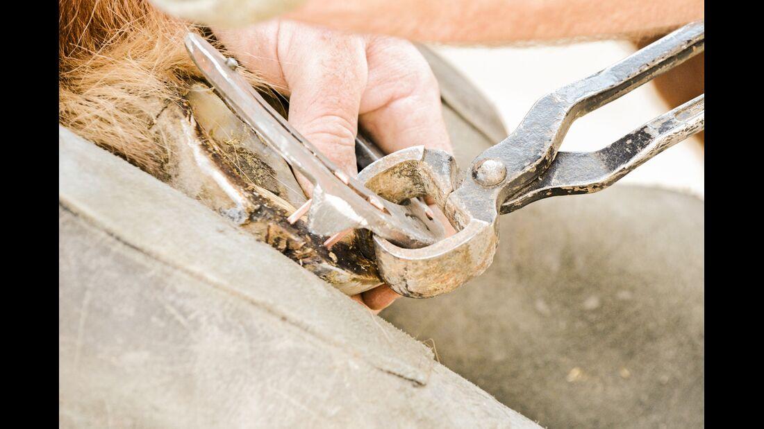 CAV Lockeres Hufeisen Eisen abhebeln
