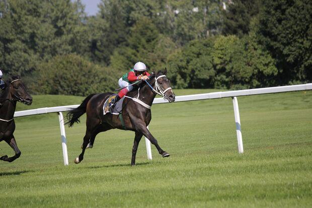 CAV Lord Rennpferd Freizeitpferd Rennen
