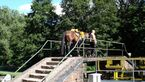 CAV_MS_Bodensee_Lago_Maggiore_03 (jpg)