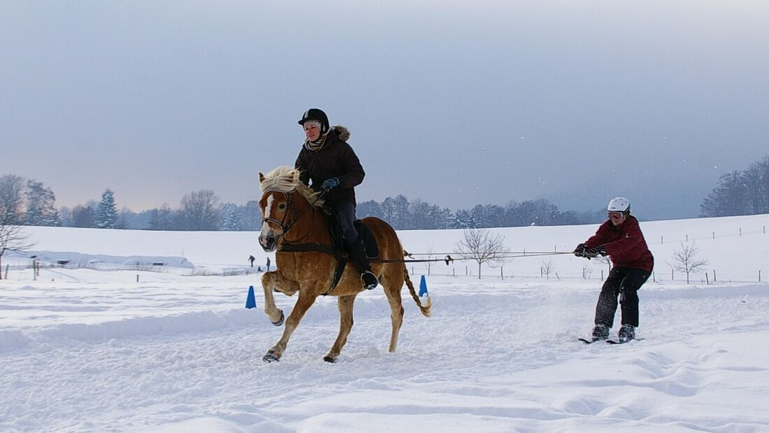 CAV MS Pferde im Winter_1 (JPG)