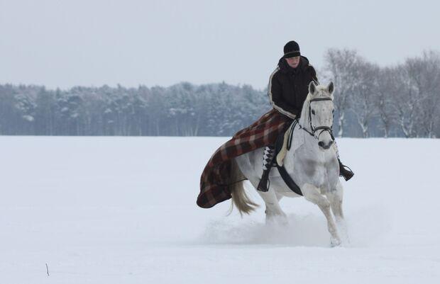 CAV MS Pferde im Winter_Daktylus im Schnee (jpg)
