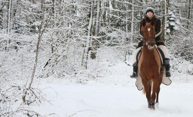 CAV MS Pferde im Winter_calli16 (jpg)