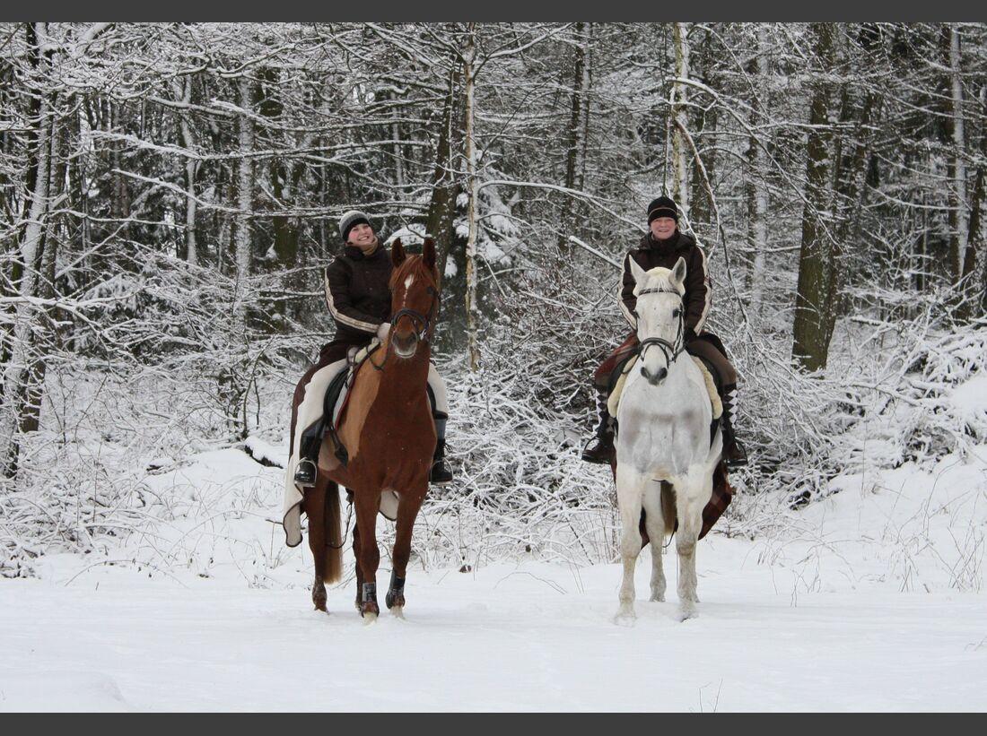 CAV MS Pferde im Winter_mit Calista und Daktylus im Schnee (jpg)
