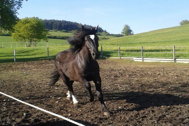 CAV Mähne Frisur Leserfotos Pferdefotos Sandra Watter