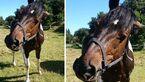 CAV Mein wieherndes Pferd Leserfotos Patricia Janke