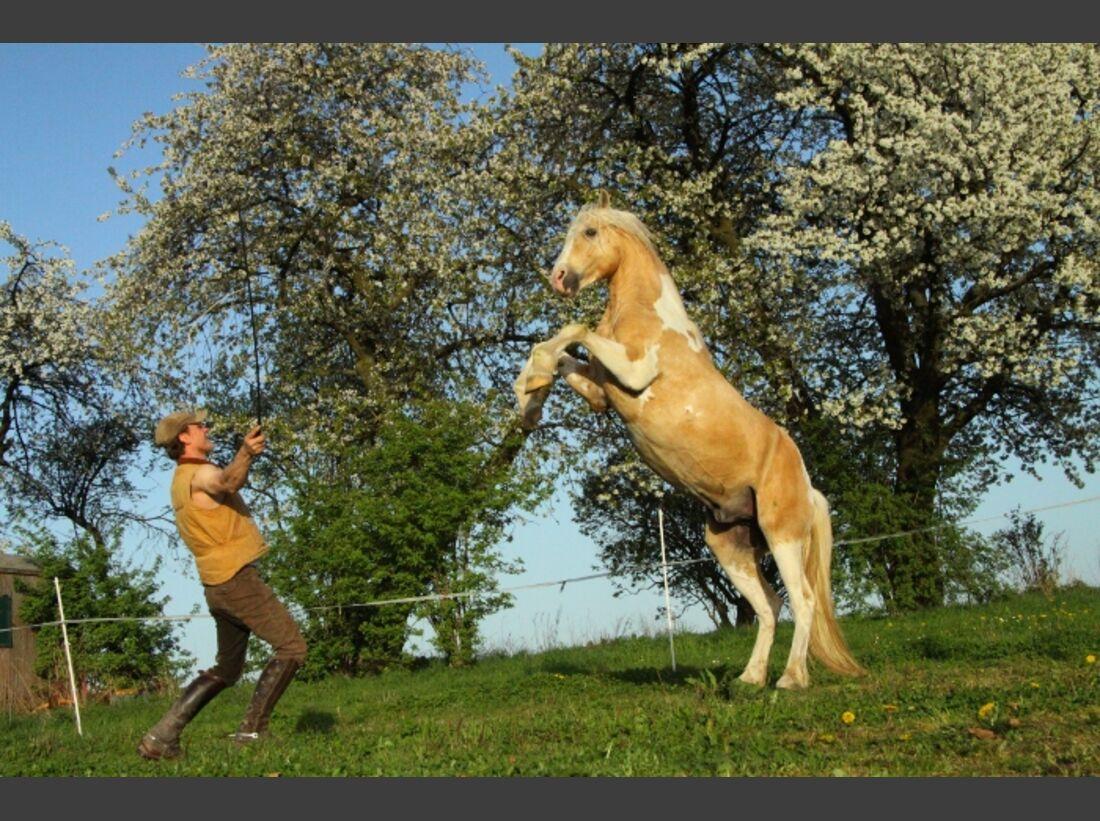 CAV Mitja Hinzpeter Working Equitation Halsring Zirkuslektionen Pinto