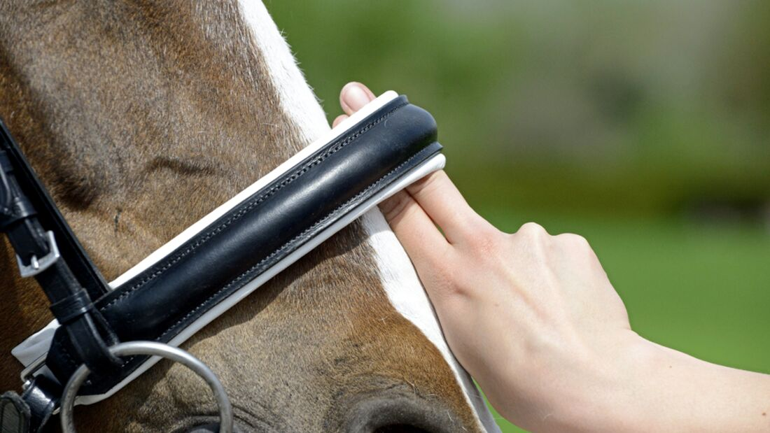 CAV Nasenriemen messen Aufmacher