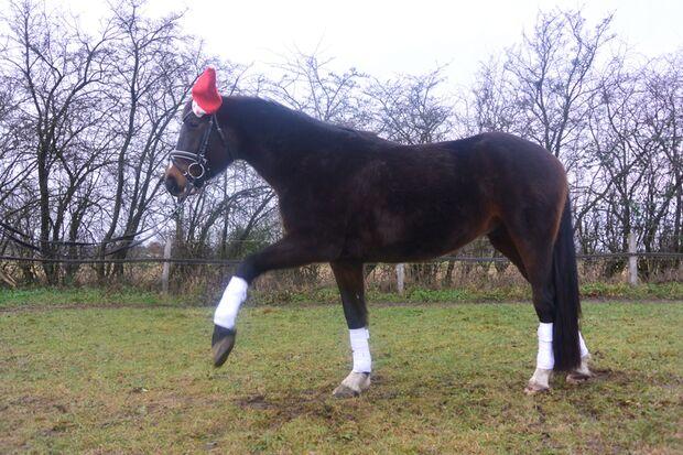 CAV Nikolaus mit Pferden Milena