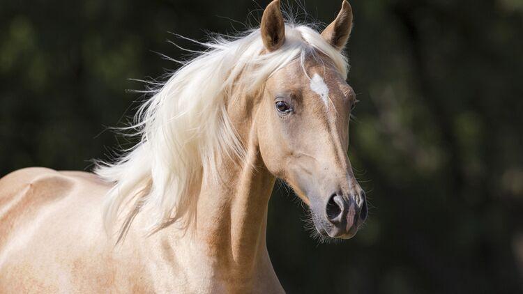 welche pferderasse passt perfekt zu mir