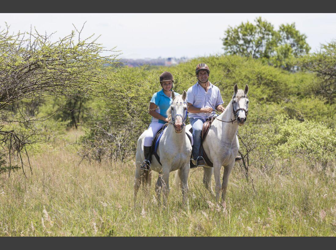CAV Nooitgedachter Rasse Pferderasse 9