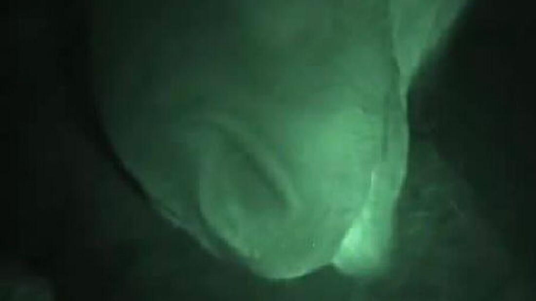 CAV Offenstall Stall Box nachts Weide Video