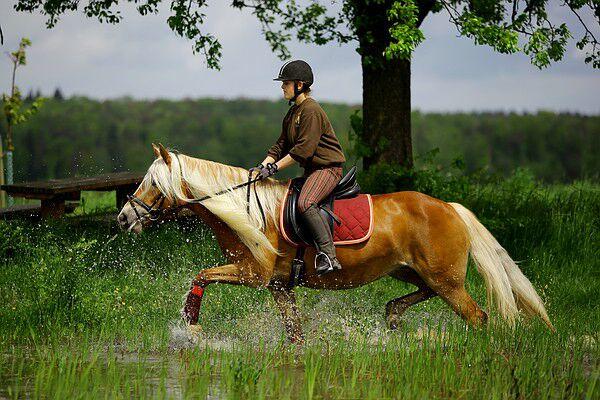 CAV Original Haflinger Pferde - 13