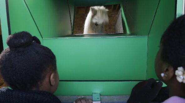 CAV Pedro Pony Shetty Periskop England