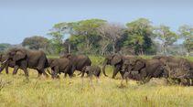 CAV Pegasus Afrika Elefanten