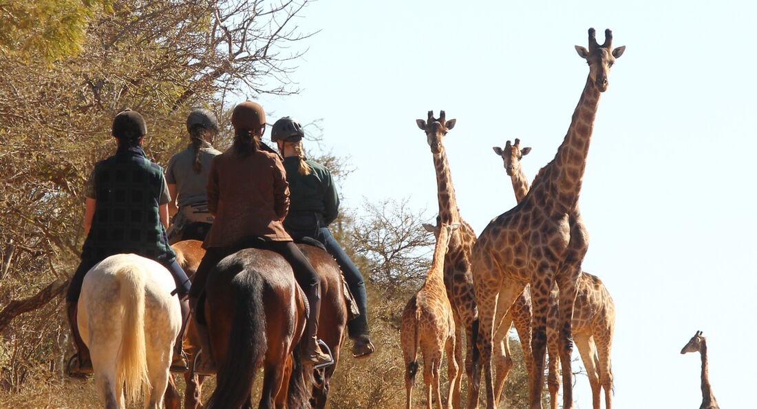 CAV Pegasus Afrika Giraffen 2