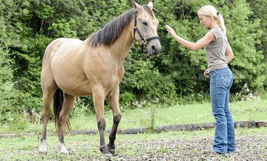 CAV Pferd Bodenarbeit Handzeichen