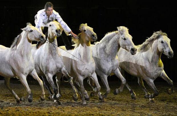 CAV Pferd Bodensee Messe Friedrichshafen _05