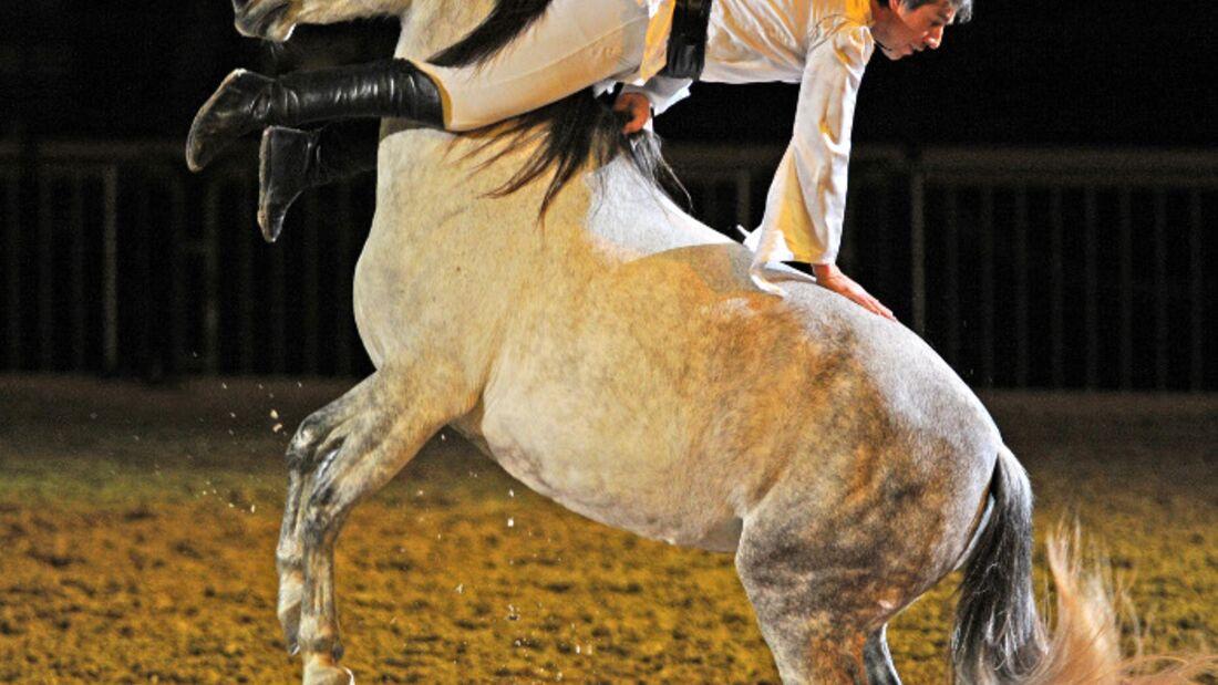CAV Pferd Bodensee Messe Friedrichshafen _11