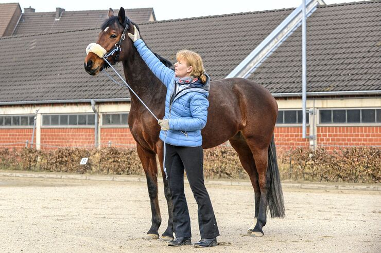 CAV Pferd Coach stehen auf Platz