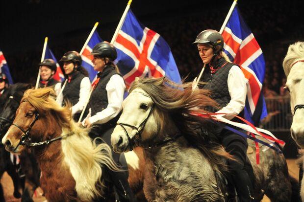 CAV Pferd & Jagd 2012 Isländer