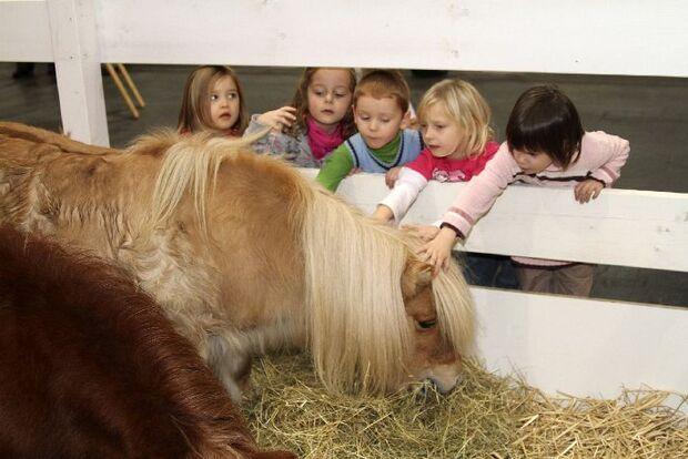 CAV Pferd & Jagd 2012 Messe