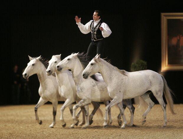CAV Pferd & Jagd 2012 Show Lorenzo