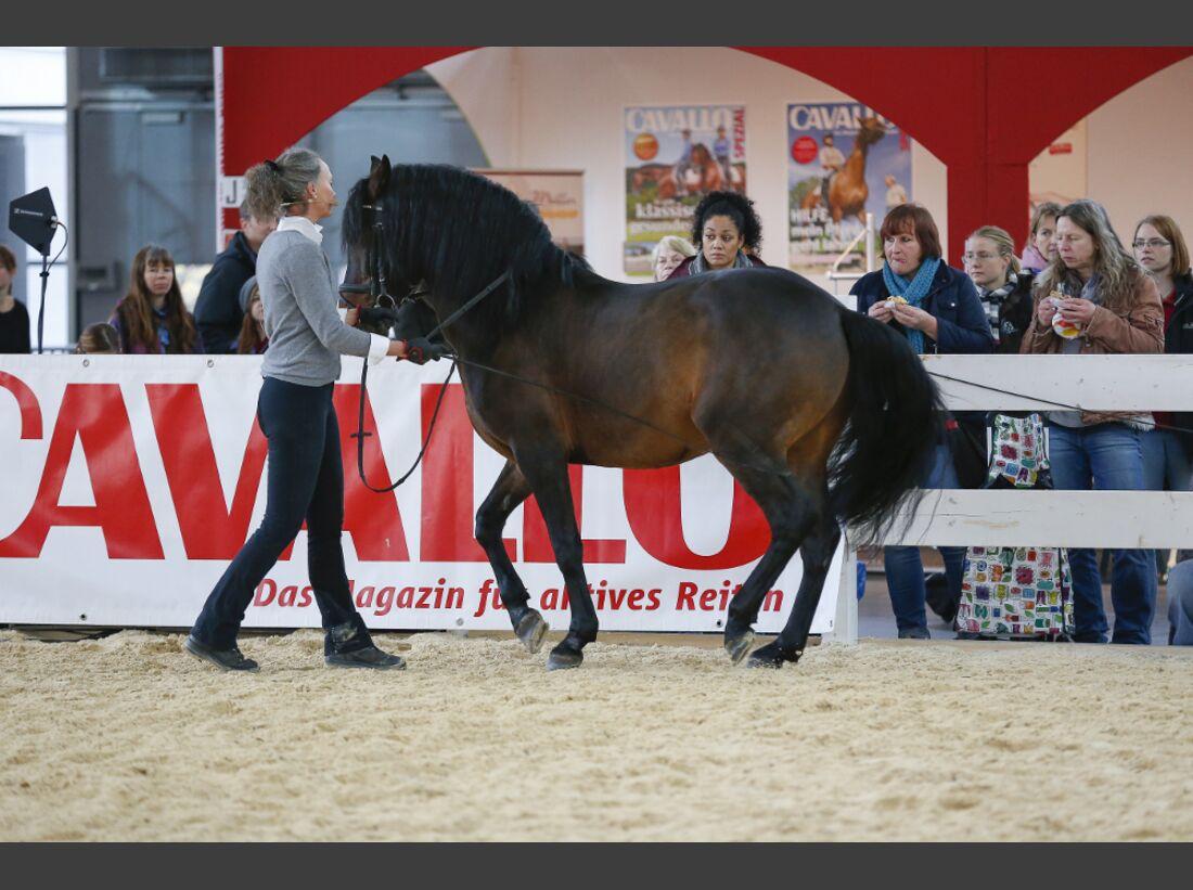 CAV Pferd Jagd 2014 Messe Saskia Gunzer