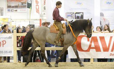 CAV Pferd Jagd Arien Aguilar
