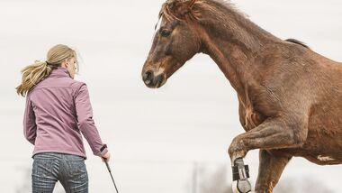 CAV Pferd Kommunikation Mitspracherecht