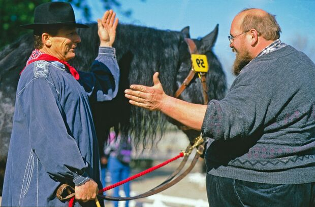 CAV Pferd Pferde Pferdekauf Pferdesteuer