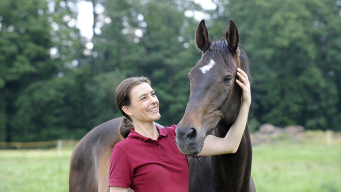 CAV Pferd Pferdekopf Brauner