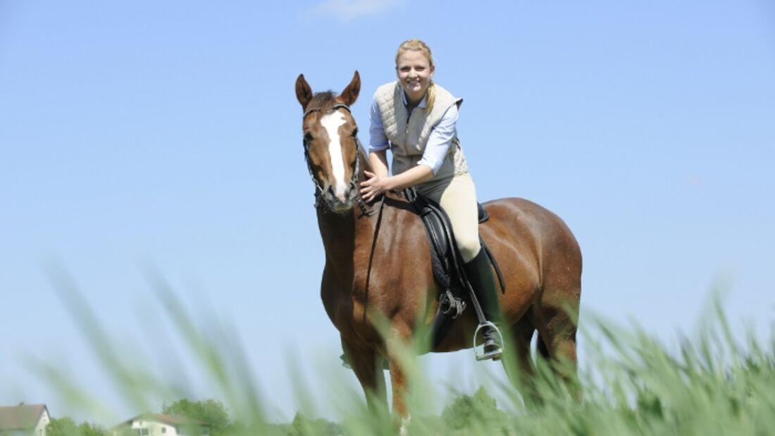 CAV Pferd Reiter Fuchs Gelände