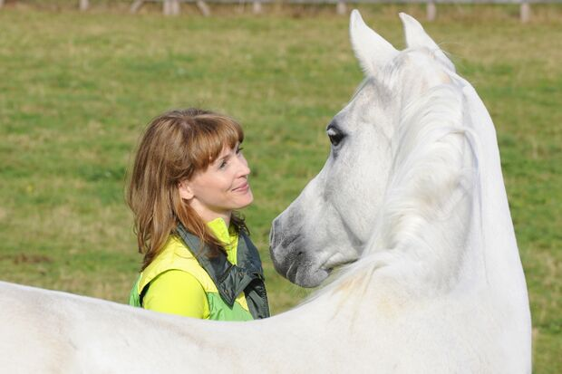 CAV Pferd Schimmel Pferdekopf