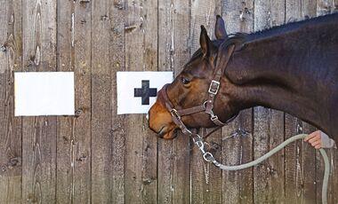 CAV Pferd Test Intelligenz schlau