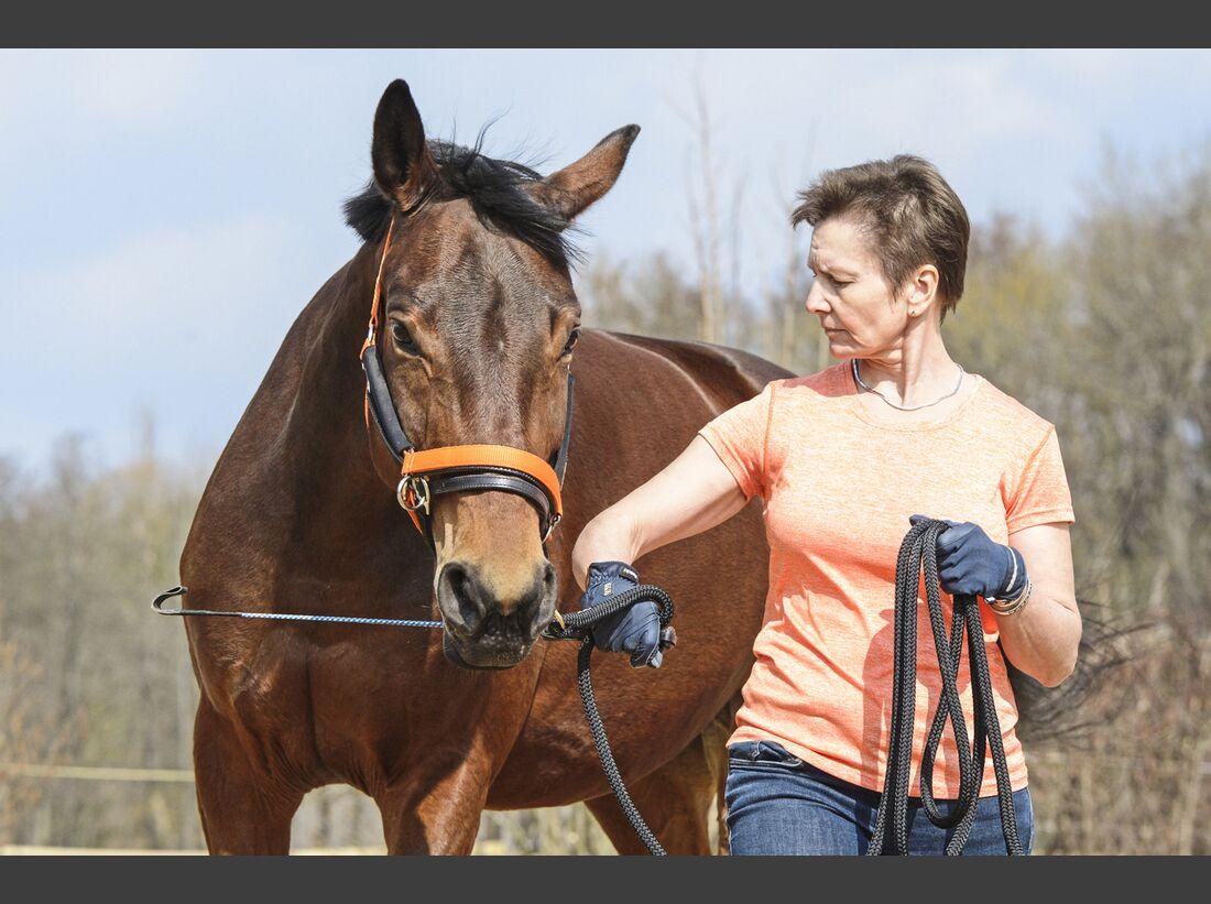 CAV Pferd an Longe