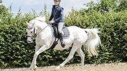 CAV Pferd gute Laune
