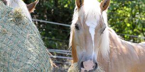 CAV Pferd mit Heunetz Teaser 2