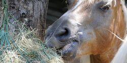 CAV Pferd mit Heunetz Teaser