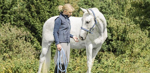 CAV Pferd mit Mensch auf Weide 680er
